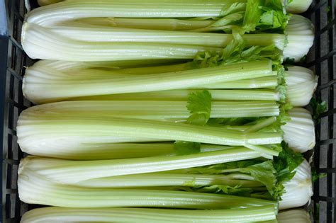 sedano bianco ingrosso sedano bianco e verde dal bello s r l