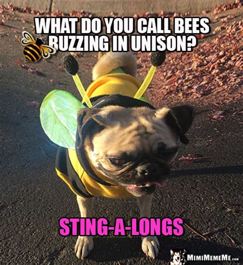 pug bee sting pug in bee costume tells bee jokes and riddles pg 2 mimimememe