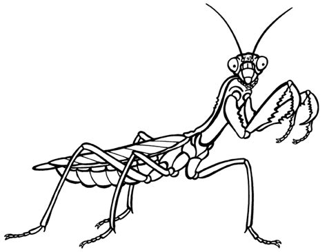 praying mantis clipart black and white cliparts co
