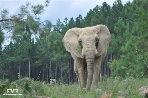 Local Tree Trimmings to Feed The Sanctuary's Elephants ...