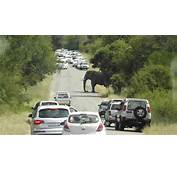 Angry Elephant Causes Roadblock In Kruger National Park