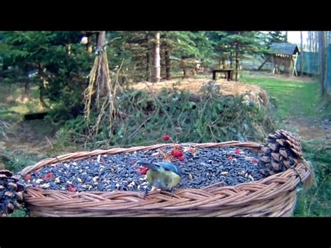 live bird feeder streaming birds cam makov bird sanctuary