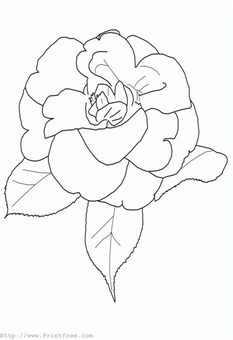 outline o flower colouring pages