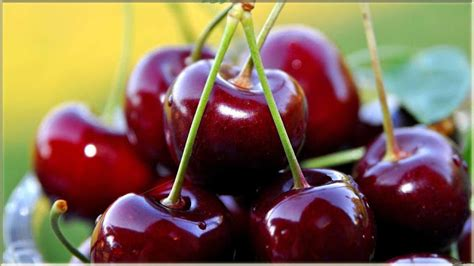 wallpaper cantik gambar buah cherry segar wwwbuahazcom