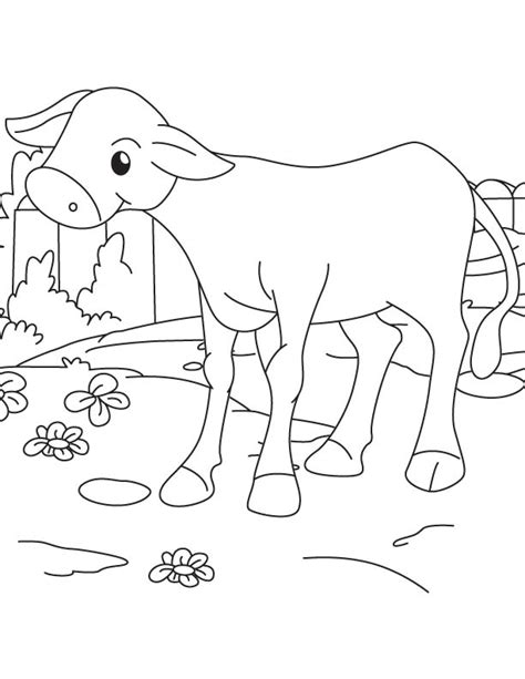 coloring pages of baby calf a baby calf coloring page download free a baby calf