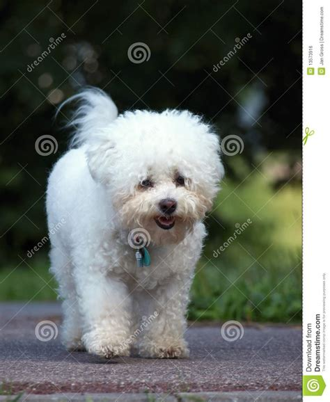 free small puppies free small dogs photograph royalty free stock image small