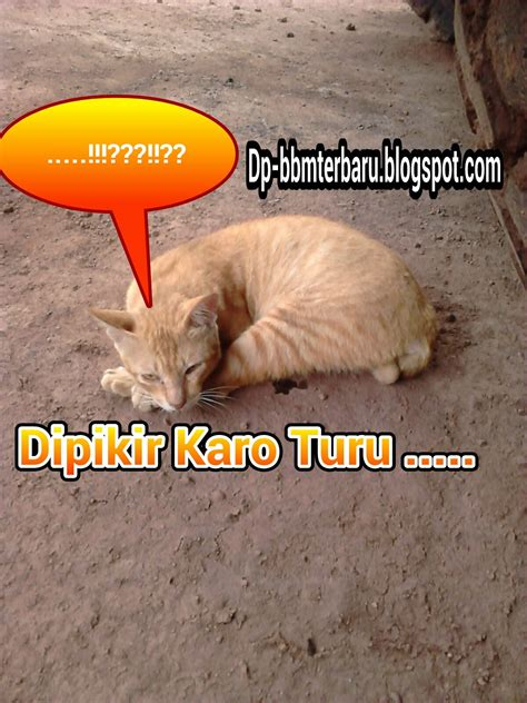 gambar kumpulan gambar dp bbm kocak unik lucu gokil