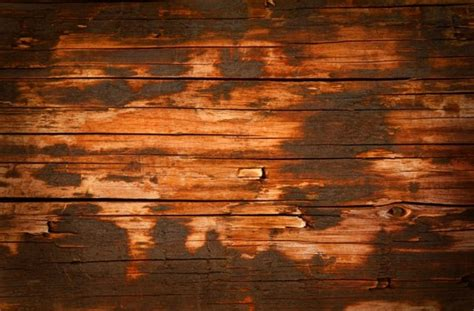 old wood paneling trees textures hd pictures free stock photos in image