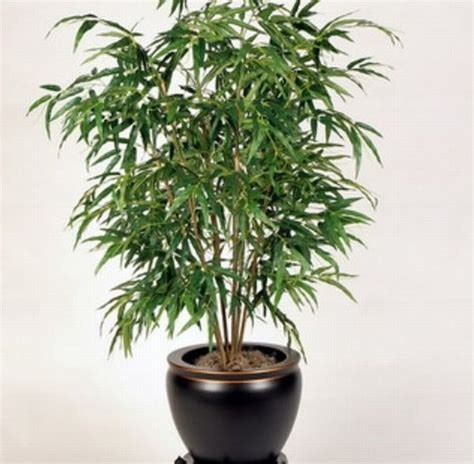 good houseplants for low light best air purifying indoor plants the bamboo palm is a