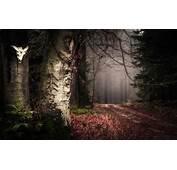 Nature Landscape Forest Path Leaves Mist Trees