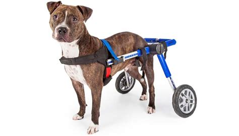 wheelchairs for dogs top 7 best wheelchair for back legs to help with mobility 2017