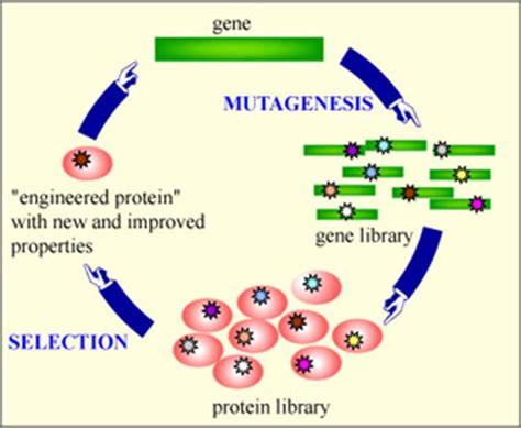 protein engineering antibiotics toxins and protein engineering biology