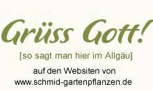 im herbst pflanzen 5314 historische englische kletterrosen und