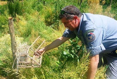 gabbia trappola per uccelli lamezia oggi dipingano sorpreso mentre esercitava