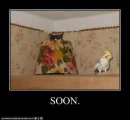 Soon cat hiding behind lamp looking at bird