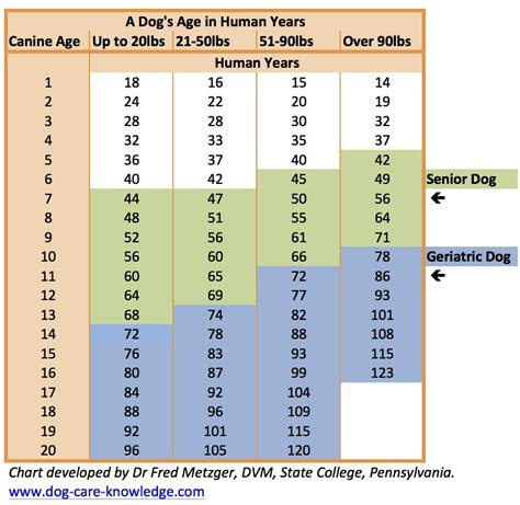 what age to start a puppy chart showing a s age in human years developed by dr fred metzger dvm state