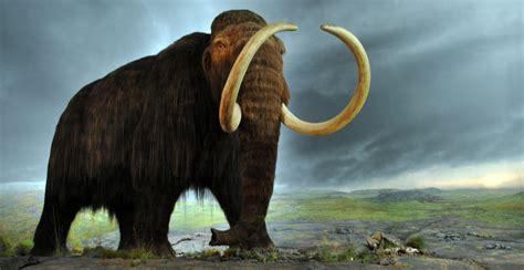Imagenes De Animales Extinguidos | los animales extintos m 225 s impresionantes de la historia