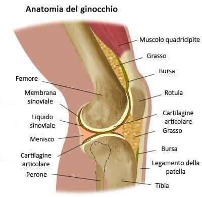 ginocchio dolore interno laterale dolore al ginocchio cause rimedi naturali e creme