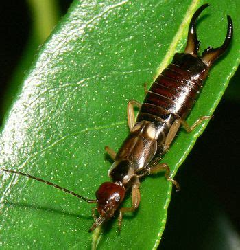 8 Ways To Deal With Pests by Garden Insect Pests And What To Do About Them