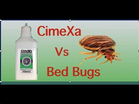 bed bugs youtube cimexa dust vs bed bugs youtube