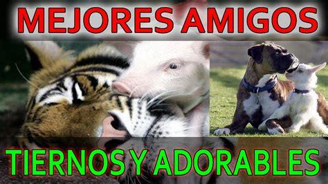 imagenes de animales graciosos y tiernos animales tiernos y adorables imagenes de animales