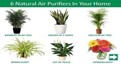 natural air purifiers