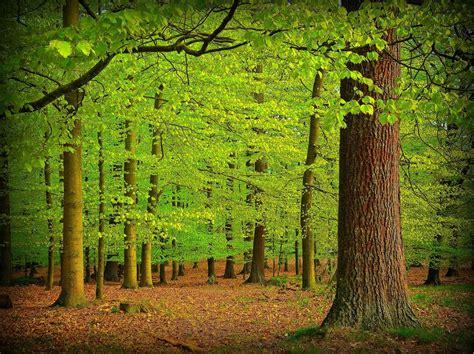 imagenes de bosques verdes unique wallpaper 24 fotograf 237 as de paisajes naturales del