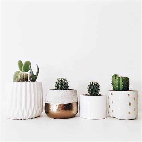 office plant decoration kl best 25 cactus decor ideas on pinterest cactus cactus