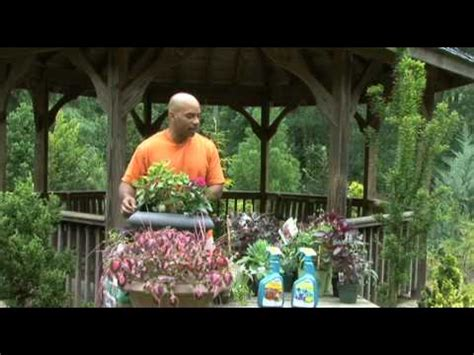 organic container gardening for beginners organic container vegetable gardening for beginners from