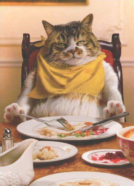 fat cat asleep  table funny humorous thanksgiving card  avanti press