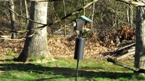 compact bird feeder baffle squirrel 37 bird feeder pole