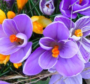 efficacia fiori di bach quali fiori di bach si possono usare contro l ansia