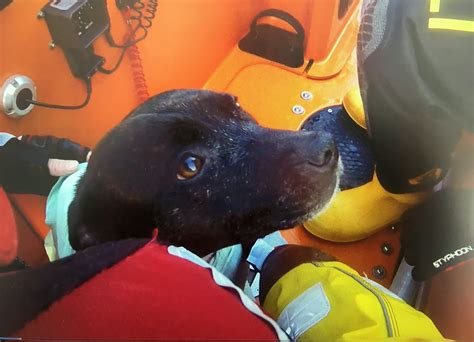 paw patrol lifeboat hero lifeboat volunteer dived into freezing waters to