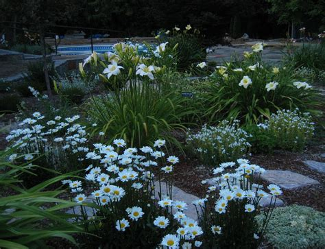 perennials forum moon gardens garden org