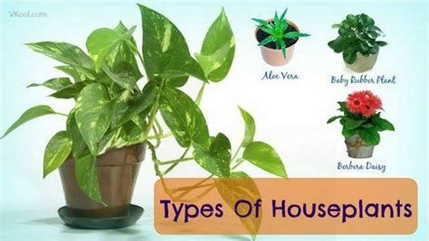 types of houseplants that clean indoor air and lower stress