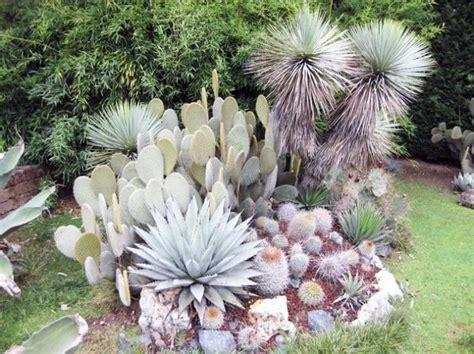 giardini piante grasse per esterno piante grasse da esterno come coltivarle