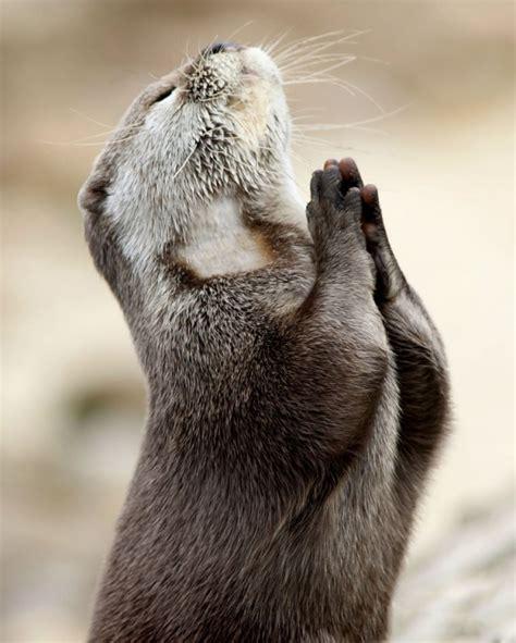 nalgonas con perros 30 cutest exles of animal praying the wondrous