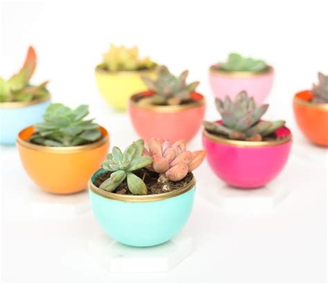 cactus planter 20 succulents quot in things quot best of pinterest tinselbox