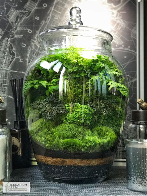 terrarium farmhouseterrariumideas terrarium plants