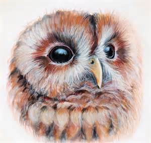 owl colors image from http paintdrawblend wp content uploads