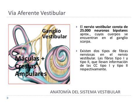 nervio vestibular sindrome vestibular