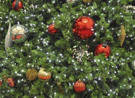 weihnachtsbaum wie er l 228 nger h 228 lt pflege tipps garten