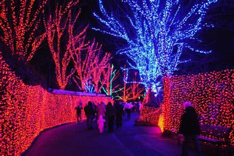 Zoo Lights Is Now Open Cathy Stubbs Realty Lights Zoo