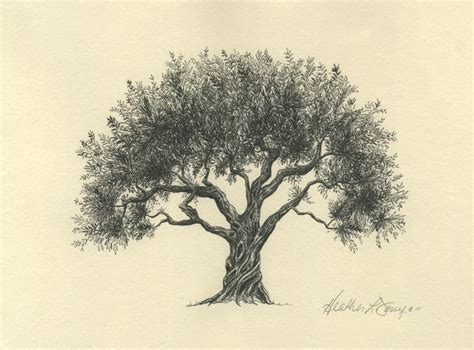 Drawing Trees by La Ceiba Png 532 215 349 P 237 Xeles 225 Rbol Geneal 243 Gico