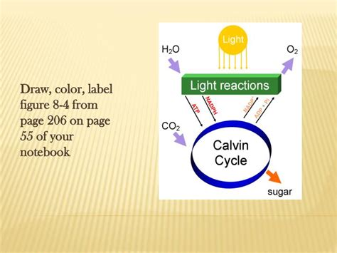 describe the relationship between chlorophyll and the color of plants ppt b 3 1 summarize photosynthesis interpret the