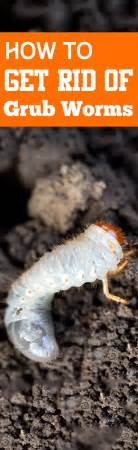 how to get rid of grub worms bless my weeds