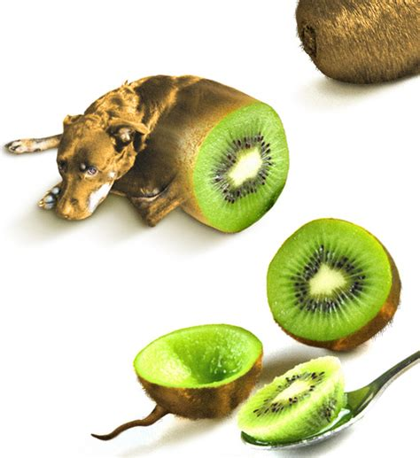 can dogs eat kiwi photoshop contests win real prizes photoshop tutorials photoshop forums