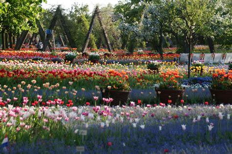 britzer garten tulipan britzer garten tulipan neuk 246 lln