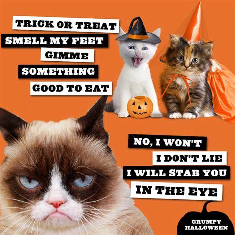 Halloween Cat Meme - dashing through the no