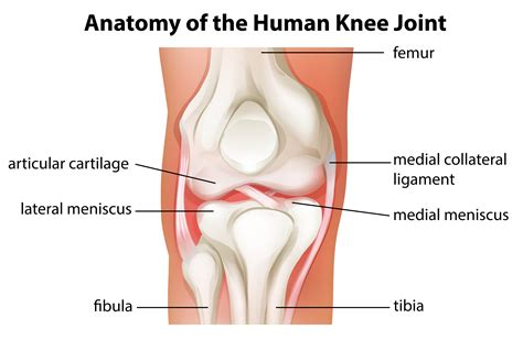 knee pain after c section knee injuries kneepain com